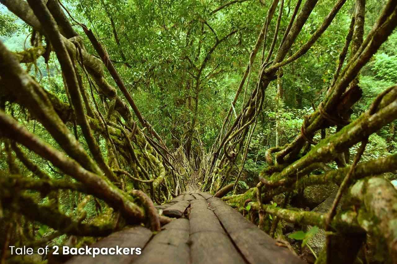 Root Bridge of Meghalaya