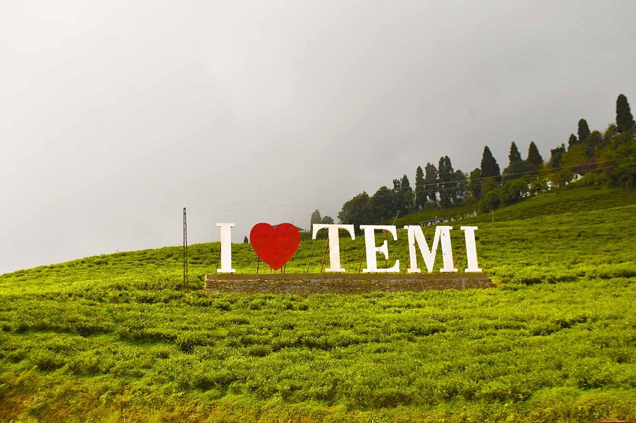 Trmi Tea Garden Sikkim