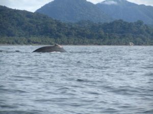 Humpback whale watching in Nuqui Colombia ecotourism destinations