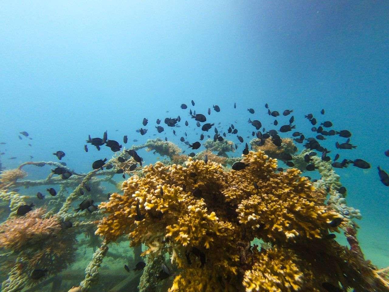 Koh Tao Reef Thailand
