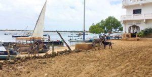 Lamu Kenya