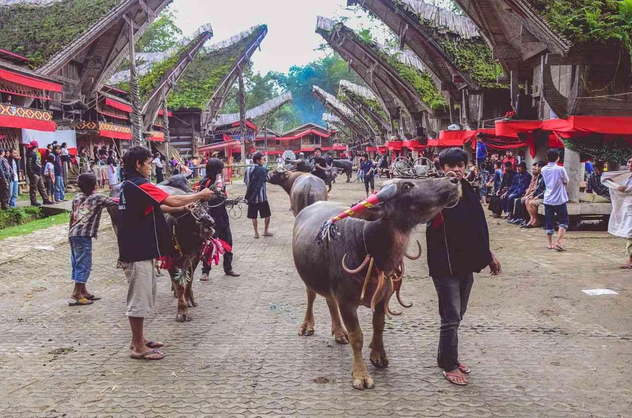 Toraja at Sulawesi in Indonesia