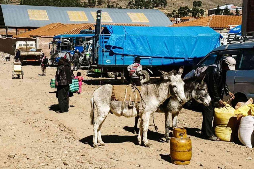 Tarabuco livestock market in Sucre, Bolivia