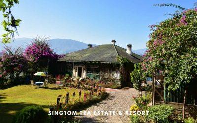 Singtom Tea Estate and Resort, Darjeeling – of Tea Gardens & Kanchenjunga