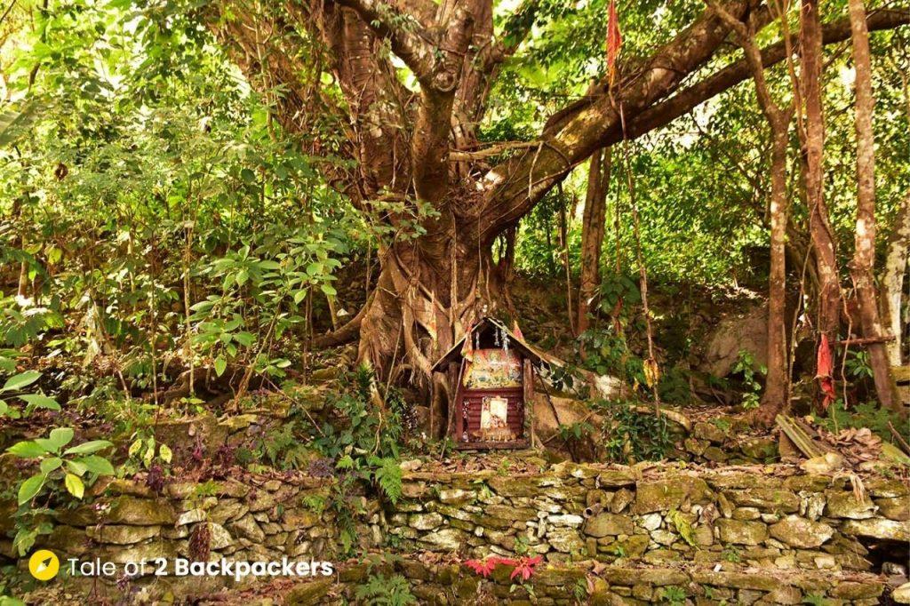 Ancient tree at Chalamthang