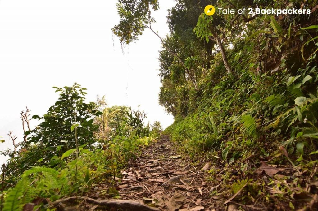 Forest trail in Chalamthang