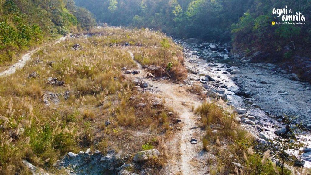 Kash ful at Bidyang near Kalimpong