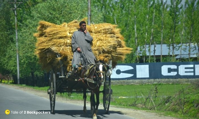 A local on the roads of Kashmir