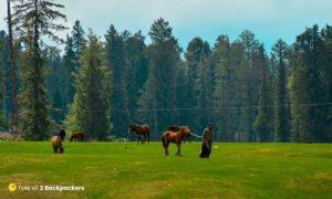 Horsemen with their horses at Yusmarg