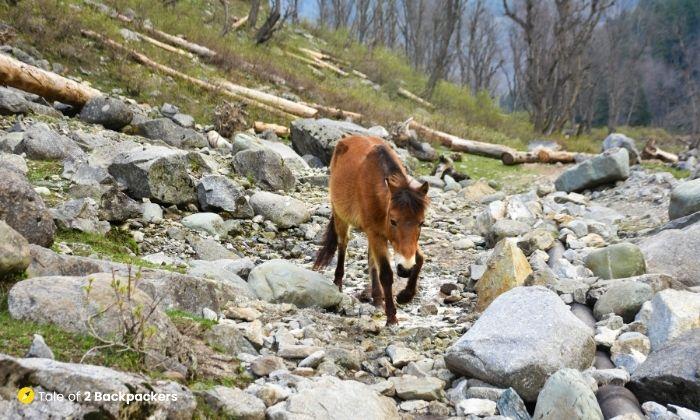 Horses at Dumail Trek Trail
