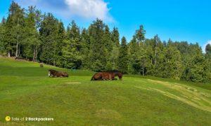 Horses at Yusmarg Meadows