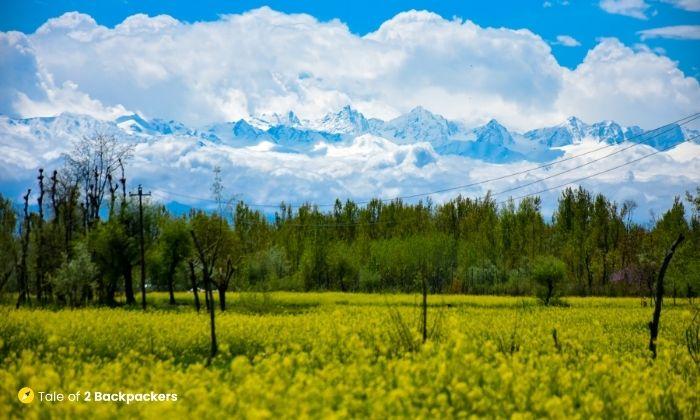 Landscape of Kashmir