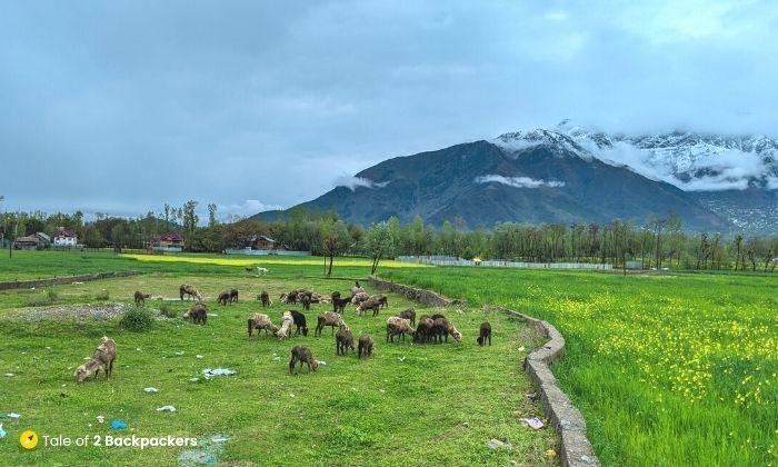 Views from the Kashmiri roads