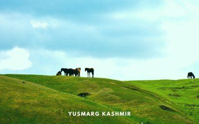 YUSMARG, Unexplored Kashmir – A Complete Travel Guide