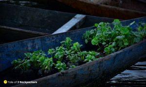 Vegetables sold at floating vegetable market Srinagar
