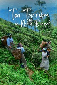 Tea Tourism in North Bengal